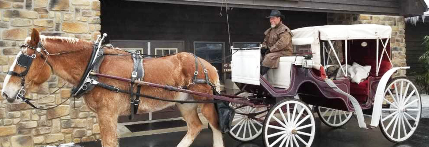 Horse Drawn Carriage And Wagon Services Mt Creek Stables
